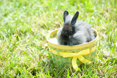 Easter bunny. Adorable bunny outdoors in an Easter basket Royalty Free Stock Images
