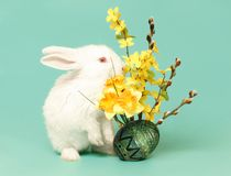 Free Easter Bunny And Egg Royalty Free Stock Photography - 7694927