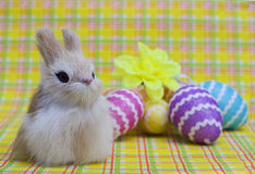 Easter bunny on a background of colorful eggs Stock Photo