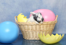 Easter Bunny Basket Stock Images