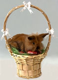 Easter bunny in a basket Stock Images