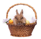 Easter bunny in the basket Royalty Free Stock Images