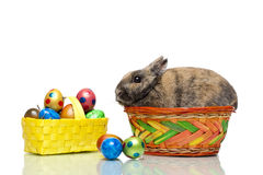 Easter bunny in basket with Easter eggs Royalty Free Stock Images