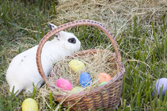Easter Bunny and Basket of Eggs. In the Grass stock photo