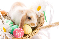 Easter Bunny in a basket with eggs Stock Photos