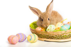 Easter bunny with basket and eggs Royalty Free Stock Photo