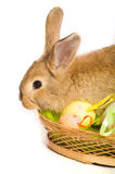 Easter bunny with basket and eggs Royalty Free Stock Images