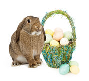 Easter Bunny With Basket of Eggs Stock Photos