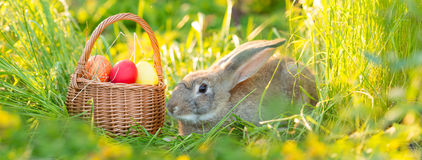 Easter bunny with a basket of eggs on spring flowers background. Card of cute hare outdoor Royalty Free Stock Photos