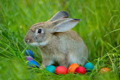 Easter bunny with a basket of eggs on spring flowers background. Royalty Free Stock Photo