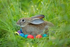 Easter bunny with a basket of eggs on spring flowers background. Royalty Free Stock Photography