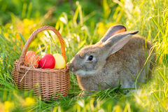 Easter bunny with a basket of eggs on spring flowers background. Card of cute hare outdoor Stock Images