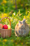 Easter bunny with a basket of eggs on spring flowers background. Card of cute hare outdoor Stock Image