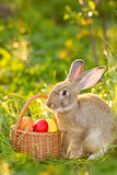 Easter bunny with a basket of eggs on spring flowers background. Card of cute hare outdoor Royalty Free Stock Photo