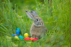 Easter bunny with a basket of eggs on spring flowers background. Card of cute hare outdoor Stock Photos