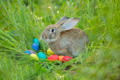 Easter bunny with a basket of eggs on spring flowers background. Card of cute hare outdoor Royalty Free Stock Image