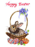 Easter bunny in basket with eggs with traditional painting, chick and spring flowers: pansies and violets, `Happy Easter` Royalty Free Stock Photo