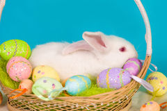 Easter bunny with basket and eggs Stock Photography