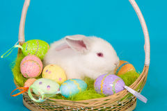Easter bunny with basket and eggs Stock Photo