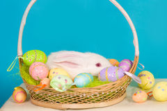 Easter bunny with basket and eggs Royalty Free Stock Photography