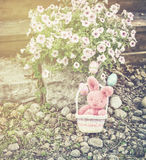 Easter Bunny in a Basket in a Garden Stock Photo