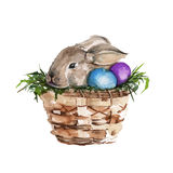 The Easter Bunny in the basket. isolated. Watercolor Stock Images