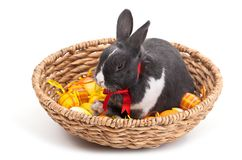 Easter bunny in basket isolated on white Royalty Free Stock Images