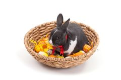 Easter bunny in basket isolated on white Royalty Free Stock Image