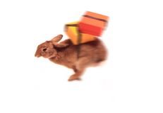 Easter Bunny bearing Gifts. With some motion Blur in parts Stock Photography