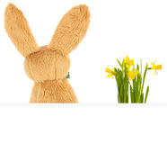 Easter Bunny from behind Royalty Free Stock Photography