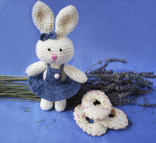 Easter bunny with biscuits and lavender. A toy for child, white bunny (girl) in blue dress with  biscuits and branch of lavender on the blue background Royalty Free Stock Images