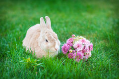 Easter bunny with bouquet of flowers in a meadow Royalty Free Stock Photo