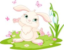 Easter bunny and butterflies Stock Images