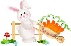 Easter bunny carrying wheel barrow full with carrots Stock Photos