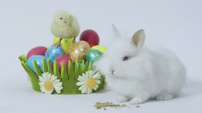 Easter bunny and chick with colored eggs on white background. Easter bunny and chick with colored eggs stock video
