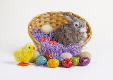 Easter Bunny, Chick & Eggs Stock Photography
