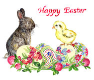 Easter bunny, chick and eggs with traditional painting and clover, Happy Easter Stock Image