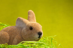 Easter bunny close up Stock Image