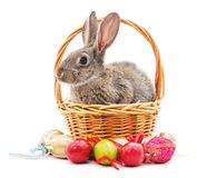 Easter Bunny with colored eggs. Royalty Free Stock Photo