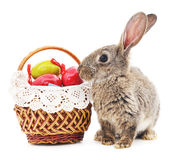 Easter Bunny with colored eggs. Royalty Free Stock Images