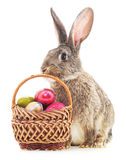 Easter Bunny with colored eggs. Stock Photo
