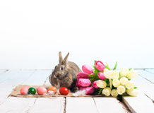 Easter bunny with colored eggs and bouquet of tulips Royalty Free Stock Photo