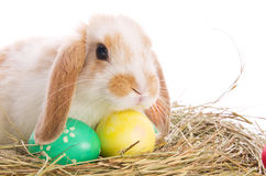Easter bunny with colored eggs in the hay Royalty Free Stock Photos