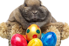 Easter bunny with colorful Easter eggs Stock Photo