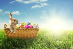 Easter bunny and colorful eggs with basket Royalty Free Stock Image