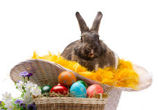 Easter bunny, colorful eggs and flowers Stock Photos