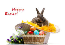 Easter bunny, colorful eggs and flowers Royalty Free Stock Images