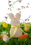 Easter bunny cookie Stock Photos