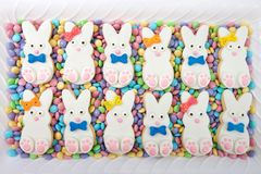 Easter bunny cookies, boys and girls alternating laying on candy coated chocolates. On a white rectangular plate. Spring colors. Home made original design royalty free stock photos