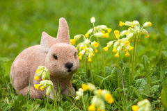 Easter bunny with cowslips (Primula veris) Stock Image